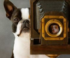 Животные и фотоаппарат (36 фото)