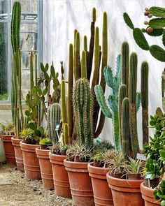 Easy Desert Landscaping Tips That Will Help You Design A Beautiful Yard Indoor Cactus Garden, Cactus House Plants, Outdoor Plants, Cacti And Succulents, Planting Succulents, Planting Flowers, Succulent Landscaping, Landscaping Tips, Deco Cactus