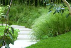 Acheter un Stipa 'Pony Tails' une plante au feuillage très fin de couleur vert clair. Graminée pour jardin et balcon de plein soleil. Commander en ligne votre Stipa sur www.tijardin.com