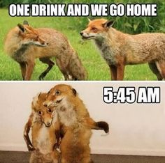 Animals is most funny and humor. They do natural things with some fun. But they are not understand what that they doing.Just see and Read these Animals Humor memes. Memes Humor, Frases Humor, Humor Quotes, Dog Memes, Life Quotes, Funny Animal Memes, Funny Animal Pictures, Funny Animals, Funny Cute