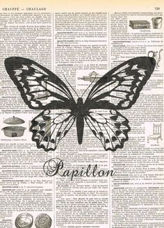 Antique Book PagesButterfly Papillon Insect
