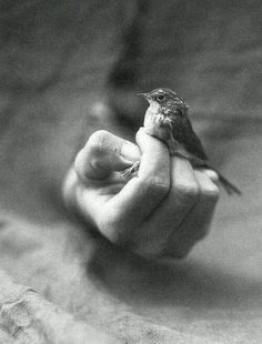 His eyes are on the sparrow and we are worth so much more to God than we could ever imagine Mediate on MATTHEW [photographer Victor Schrager] Art Of Letting Go, His Eyes, Black And White Photography, Inspire Me, Storyboard, In This Moment, Feelings, My Love, Sparrows