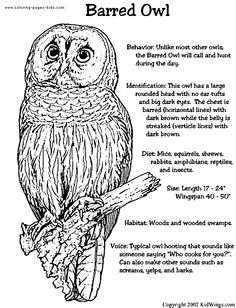 coloring book pages to print | ... coloring pages and sheets can be found in the Owls color page gallery