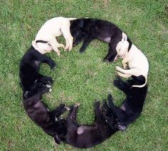 Ring of puppies. hmmm...odd yet kind of sweet.