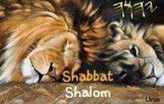 Shabbat Shalom! Gato Animal, Shabbat Shalom, Before Sunset, Star Sky, Wildlife Art, Big Cats, Sabbath, Annie, Israel