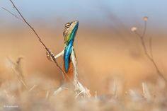 PsBattle: This regal lizard.