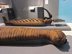 Unwrapping the Ancient Egyptian Practice of Animal Mummification