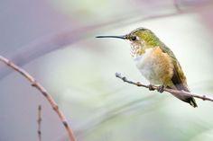 How to Take Exquisite Hummingbird Photos | Audubon
