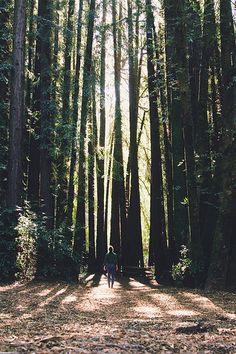 Feel small, yet significant standing in the midst of the tall trees.
