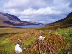 Loch na Sealga Wester Ross, North Coast 500, Brown Trout, Fly Fishing, West Coast, Scotland, Castle, Mountains, History