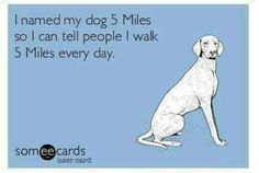 Me and my boyfriend would name our dog 20 miles
