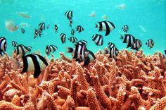 Maldives-Corals