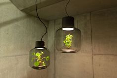 plant lamps with natural light awesome 1 Self Contained EcoSystems: Amazing Light Fixtures with Live Plants Inside
