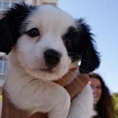 🐶😍🐶😍 #dog #photooftheday #cute #petstagram #supercute #animals #cats #animal