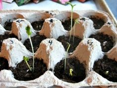 Earth Day Activities for Kids - Plant a Seed - http://TodaysMama.com