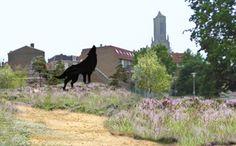 Vanaf juni is de Arnhemse binnenstad een park rijker. Een klein stukje Veluwe in het centrum van de stad, dat is het idee. Volgens initiatiefnemers, Transitieteam en Buro Harro, wordt het een 'pop-up park' die een tijdelijk braakliggend stuk grond verandert in een glooiend heidelandschap. Begin juni verdwijnen de bouwhekken en op vrijdagmiddag 8 juni om 16:00 uur wordt het Bartokpark feestelijk geopend.