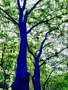 Westlake Park Seattle Washington, Blue Trees