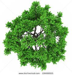 tree top view in 100Mpix by photoart985, via Shutterstock