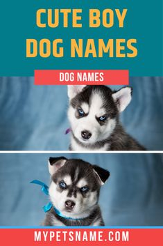 Some of the really cute boy dog names can be found within the Latin and Hebrew languages. These languages give words with adorable meanings to show off your dog's brilliant qualities! Take a look now!  #boydognames #cuteboydognames #dognames Good Boy Dog Names, Funny Dog Names, Cute Names For Dogs, Funny Puns, Languages, Cute Boys, Your Dog, Pets, Funny Pun Names