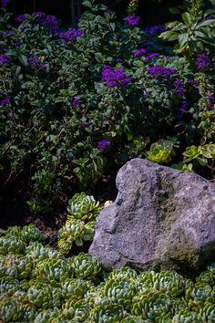 Cabbage, Vegetables, Plants, Succulents, City, Flowers, Veggie Food, Flora, Cabbages