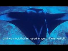 This Manta Ray Had A Fishing Line Wrapped Around Her Wing. Watch As These Divers Help Her | News Mogul