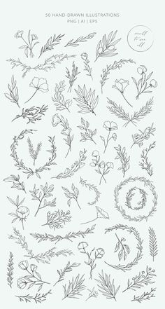 Botanical logos & illustrations by Crocus Paper on Creative Market - Botanical . - Selma Holly - Botanical logos & illustrations by Crocus Paper on Creative Market – Botanical logos & illustrat - Illustration Botanique, Illustration Blume, Botanical Illustration, Creative Market, Creative Logo, Creative Design, Floral Drawing, Drawing Flowers, Painting Flowers