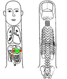 Ideas and methods to treat diseases by Su-jok medicine Acupressure Massage, Acupressure Treatment, Acupuncture Points, Acupressure Points, Kidney Cyst, Accupuncture, Self Treatment, Massage Parlors, Body Map