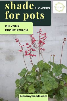 Plant sexy shade flowers for pots and give your porch some instant curb appeal. 10 Different varieties to choose from! #blessmyweedsblog #shadeflowersforpots #shadeflowers Retro Home Decor, Easy Home Decor, Cheap Home Decor, Decorating Small Spaces, Porch Decorating, Apartment Porch Decor, Interior House Colors, Interior Design, Cheap Party Decorations