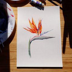 ave del paraiso #birdofparadise #strelitzia #strelitziareginae #avedelparaiso #watercolor #botanicalillustration