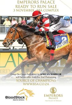 Watch her fly . 🚀💥😁👌 She is a absolutely magnificent filly with a athletic action to die for 🥰 and as fast as ⚡⚡ Half sister to the highest rated in the country.🇿🇦 and in most people's opinion the most likely to win the Guinness🏆 Run 3, The Gr, South Africa, Champion, Sisters, African, Baseball Cards, Guinness, Sports