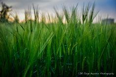 Hiding in the Fields - (JB) Jorge Bayonas Photography