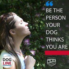 #dog #dogline #servicedogs #instagood #happy #instadaily #love #fun #look #pets #dogs #doglinegroup #fashion #follow #follow4follow #followme #veteran #vets #tag4tag #autism #PTSD #dailydog #dailyquote #doglinedaily