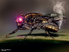 Steampunk Fly by catfish08   2nd place entry in Steampunk: Nature