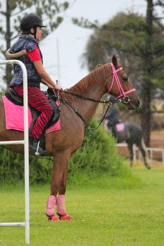 Colorful...definitely not a dressage rider!