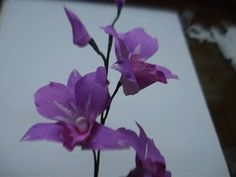 ▶ DIY Paper Flower - Orchids - YouTube / templates saved to documents/paper flowers
