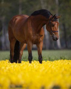 Kathiyawadi Horse, Horse Love, Horse Art, Cute Baby Animals, Animals And Pets, Funny Animals, Some Beautiful Images, Beautiful Horses, Marwari Horses