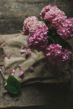 Bouquet of hydrangeas still life by Natasa Kukic for Stocksy United