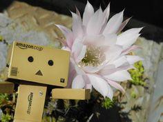 Danboard lves a cactus flower