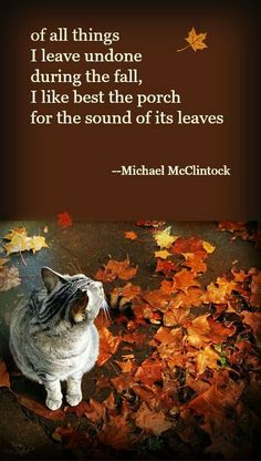 Fall ~ of all things -- by Michael McClintock.