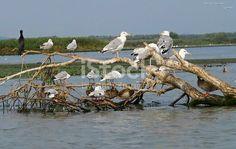 Diana, Bird, Animals, Animales, Animaux, Birds, Animal, Birdwatching, Animais