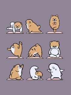 Pomeranian yoga