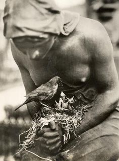 Blackbird's nest in the folded hands of a statue in a graveyard in Berlin, Germany, 1932.