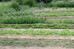 Hiekkaviljely: Voiko puutarhanhoito olla näin helppoa? - Suomela Yard, Outdoor, Garden, Plants