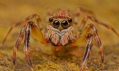Why We Should All Celebrate Save a Spider Day
