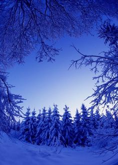 Amazing awesome beautiful-winter-scenes-photos There are many seasons and every one has its own beauty and appeal but here you will get to see exactly w Beautiful Winter Scenes, Beautiful Christmas, Blue Christmas, Christmas Images, Beautiful World, Beautiful Places, Beautiful Pictures, Trees Beautiful, Winter Trees