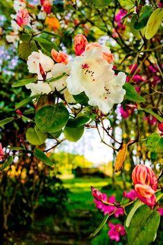 A pretty garden.....