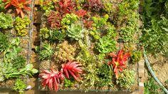 En Vivero Laguna Verde Valparaíso podrán encontrar una gran variedad de SUCULENTAS de vivos colores característica especial de sus plantas criadas al aire libre. Este año los esperan en un espacio más grande ahora con plantas para jardín, además de sus maceteros de greda, cuadros o mini jardines verticales, centros de mesa, cajas de madera […]
