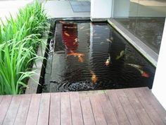 Practical Solutions Pond Fish Cleanliness