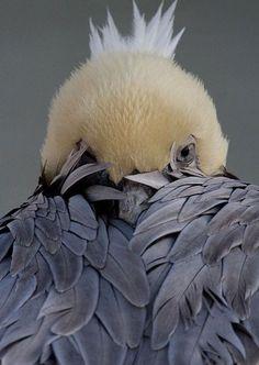 Peek-a-boo, I see you! 😆