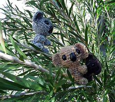 Koalas_small
